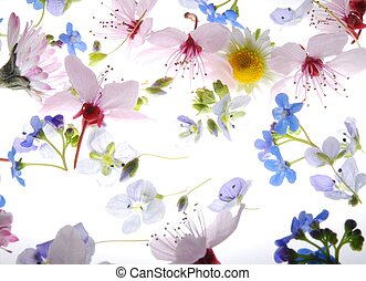 spring petals - Close-up of colorful petals against white...