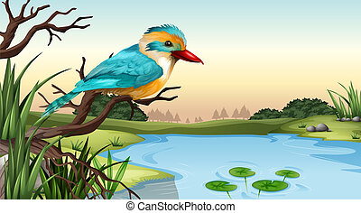 A river kingfisher - Illustration of a river kingfisher