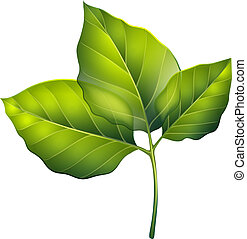 Three green leaves - Illustration of the three green leaves...