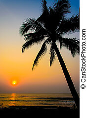 tree sunset - Palm trees on the beautiful sunset background