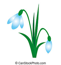 snowdrop - beautiful spring white snowdrop with green leaves