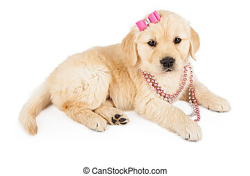 Golden Retriever Female Puppy in Pink - A cute Golden...