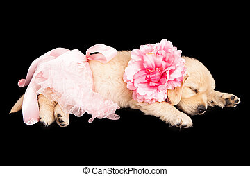 Sleeping Puppy in Pink