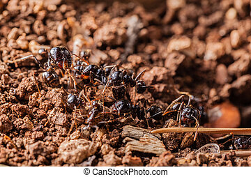 Working ants - macro shot of some ants working together