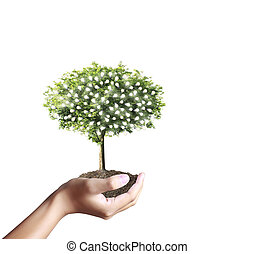 Small tree, plant in  hand  - Small tree, plant in the hand