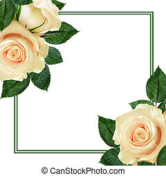 Peach rose flowers and frame on white background