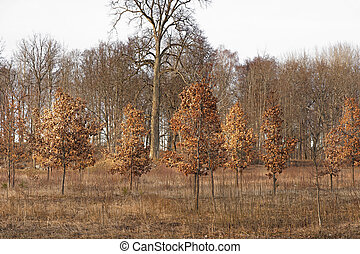Brown landscape - Landscape with brown leaves on trees in...