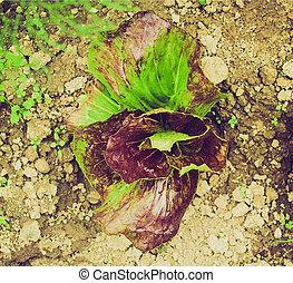 Retro look Salad picture