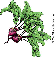 Beets vintage woodcut illustration - A beets vintage woodcut...