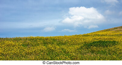 Hillside and yellow flowers