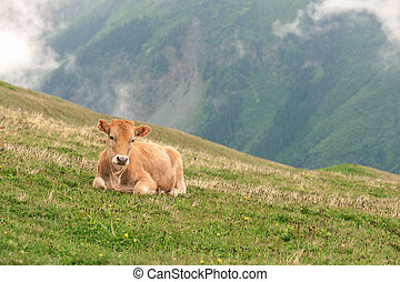 calf on green field in mountain