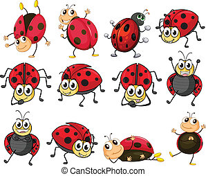 Cute ladybugs - Illustration of the cute ladybugs on a white...