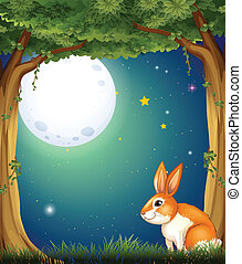 A bunny at the forest under the bright fullmoon