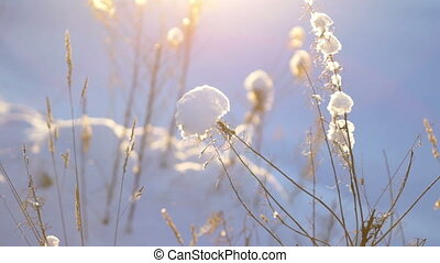 Snowdrift with dry grass close-up - Dried grass on snowy...