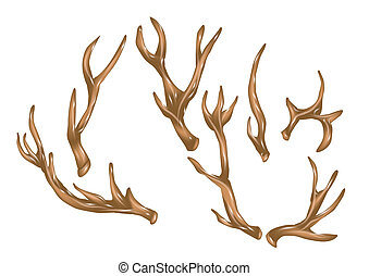 antlers. set of antlers isolated on a white background