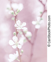 Cherry tree blossom, beautiful pink floral background,...