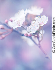 Blooming of Japanese sakura garden, abstract floral...