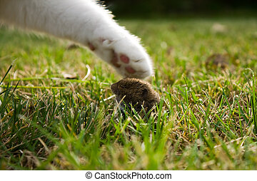 cats paw and mouse