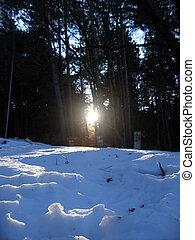 presto, foresta, inverno, alba, Mattina