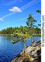 Karelian pine Lake Engozero, North Karelia, Russia -...