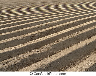 Potato field - Structure of fresh laid out potato field