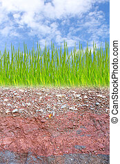 Cross section of green grass and underground soil layers