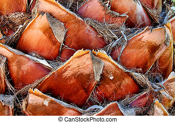 Palm - Close up of the bark of a palm tree