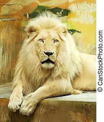 白色, 獅子