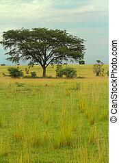 Ugandan Savanna