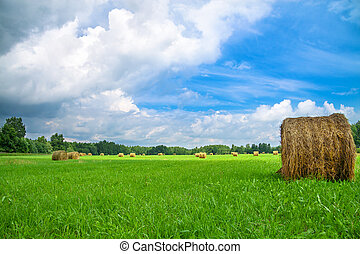 summer rural landscape with a field and hay - beautiful...
