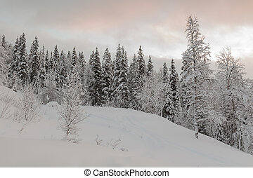calm winter landscape - Midwinter light in the north...