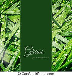 Green grass background - Green leaves background with dew...