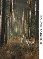 Wildlife in the Forest - The morning sun penetrates the...