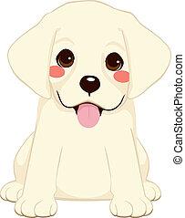 Cute Labrador Puppy - Cute White labrador golden retriever...
