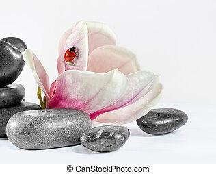 Zen stones with flower magnolia