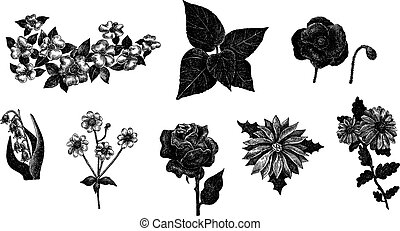 Vector set of hand drawn ink vintage flowers