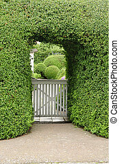 Old wooden gate and hedge - nice background