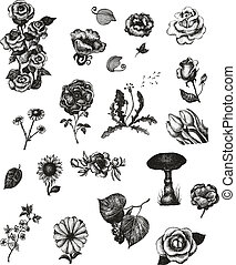 Vector set of hand drawn vintage flowers for Your design