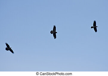 Trois, noir, Corbeaux, voler, bleu, ciel