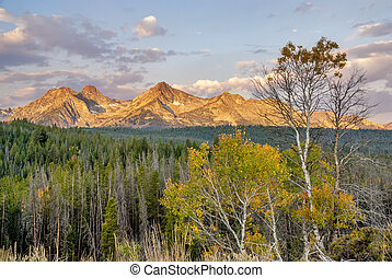 Fall trees on the Sawtooth mountains - Morning sunrise on...