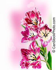 bouquet of colorful tulips fringed