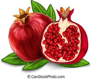 Pomegranate isolated poster or emblem - Natural organic...