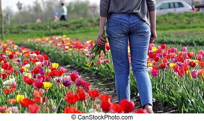 Walking in tulip field