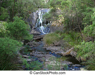 The creek in eucalyptus wood. - The creek in very thick...