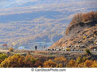 Turkey. A shepherd tending a flock of sheep.