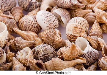 natural, fundo, -, oceânicos, conchas