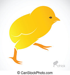 Vector image of an chick on white background
