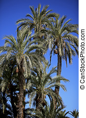 Jardin Majorelle in Marrakech Morocco