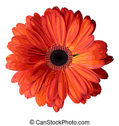 Orange gerbera. - Vector illustration. Isolated flower on...