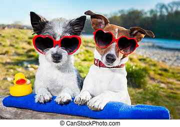 love couple on vacation - two dogs in love enjoying the...